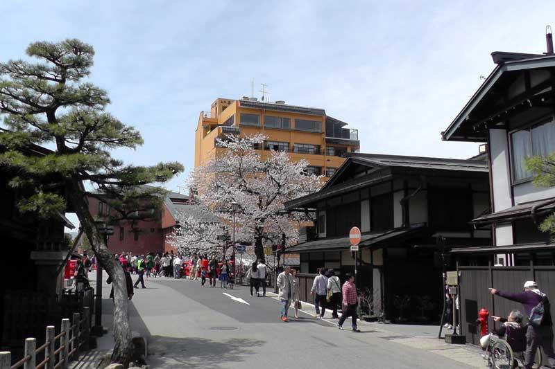 高山市内の桜(古い街並み周辺)