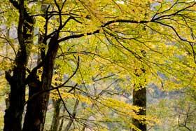 黄色と緑の色合いも綺麗