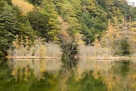 明神一之池の水面に映る黄葉