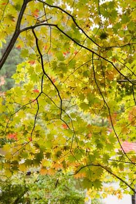 平湯民族資料館の紅葉