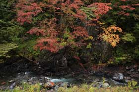 白骨温泉に向かう途中の紅葉