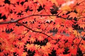 煤香庵ので紅葉