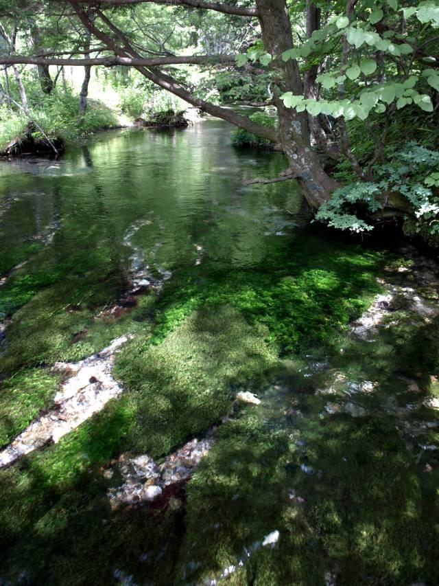 上高地の清水川