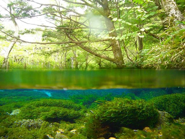 上高地の清水川の半水中